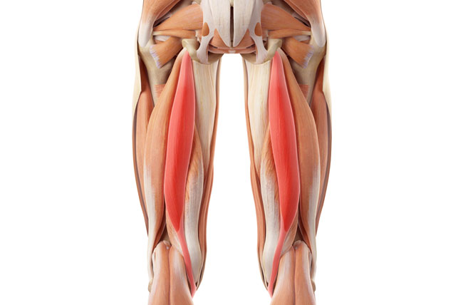 hamstring muscle